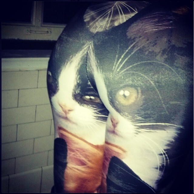 Cat Eyes Are Always Watching....<br /> #friday #someproduct #regram @dandiwind #NiceBumwhereyaFrom #fridaybumday #pussygalore #cat #leggings #someproductapparel #tgif